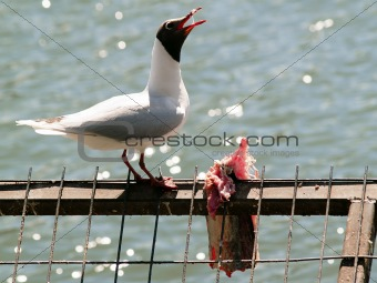 Bird eating fish