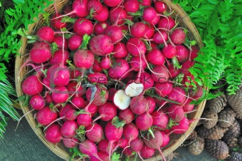 small radish in basket