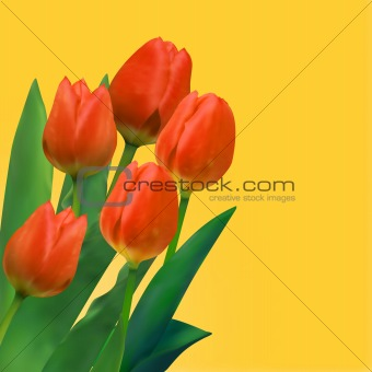 Bouquet of tulips.