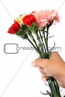 carnation, flower hold by hand