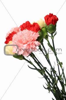 carnation, flower for mother day