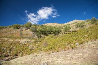 bracken slope