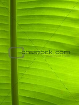 green leaf line