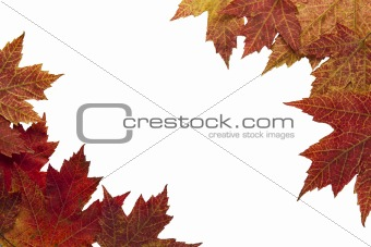 Red Autumn Maple Leaves Background 3