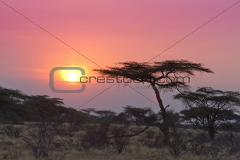 Acacia tree sunset Kenya