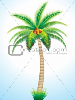 detailed palm tree with coconut