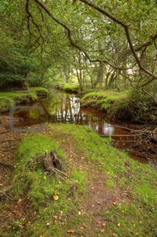 Beautiful lush forest scene with stream and touch of autumn colo