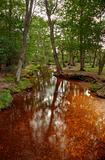 Beautiful lush forest scene with stream and touch of autumn