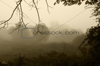 Beautiful stirring forest and field scene with layers of mist
