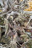 root of dead tree
