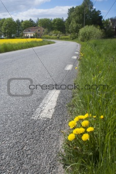 Country road wity dandelions