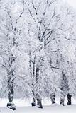 Trees in rime frost