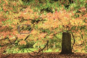 Beautiful Autumn Fall scene with vibrant colors