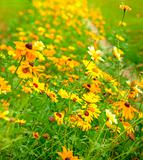 Beautiful fresh vibrant Autumn Fall wild flower scene
