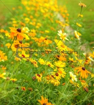 Beautiful fresh vibrant Autumn Fall wild flower scene