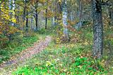 foot path in autumn forest