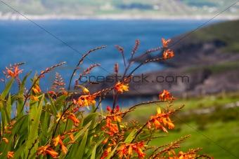Atlantic coast in Ireland