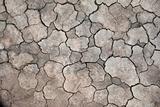 cracked dry clay