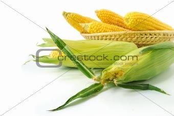 Fresh corncobs