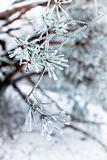 Frozen needles