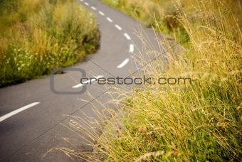 Asphalt bicycle path in a field