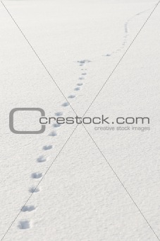 Footprints in snow