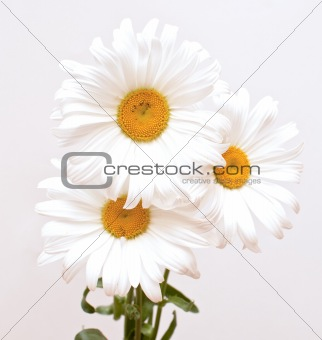 bouquet of white beautiful
