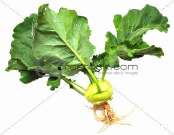green kohlrabi cabbage