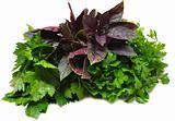 basil, parsley, celery