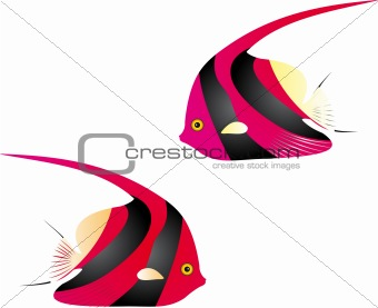Angelfish vector