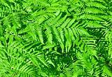 fern growing in a forest