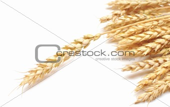 ear wheat