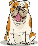 dog breeds: bulldog