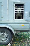 trailer to transport dogs