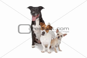 small group of dogs isolated on white