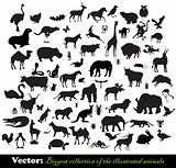 Biggest collection of the illustrated animals