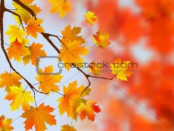 Autumn, sunny maple leaves, autumnal ornament.