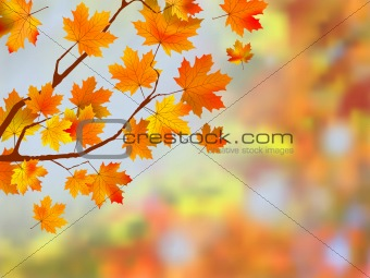 Colorful autumn leaves background.