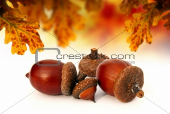 Isolated abstract acorns