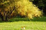 Autumn bush in the park