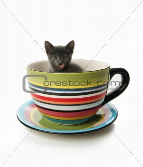 Kitty in tea cup mug