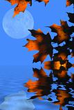 Autumn Leaves and Moon