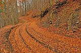 Orange autumn path through forest