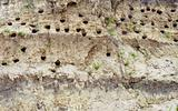 Holes dug by swallows in river bank