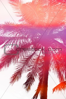 Abstract Palm Tree Sunset