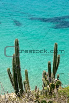 cacti against a blue ocean background
