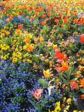 A Field Of Lovely Flowers