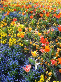 A Field Of Lovely Flowers