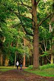Walking in old park
