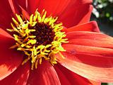 Red Flower 7